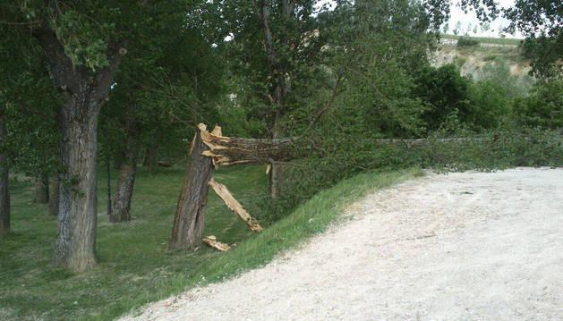 Caído un árbol en el paseo del Arga a la altura del puente viejo