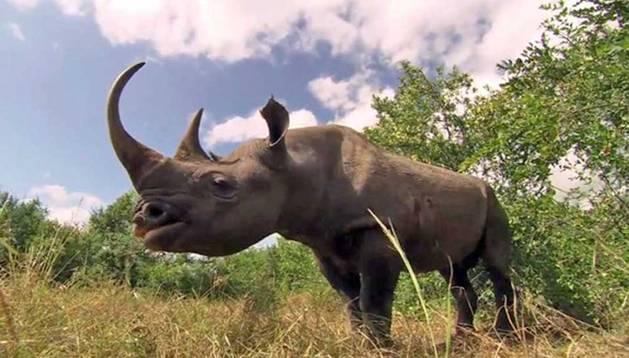 Un rinoceronte.