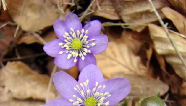 Las propiedades de las plantas medicinales, en Civivox Mendillorri