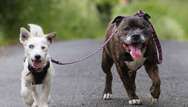 Glenn y Buzz, durante uno de sus paseos.