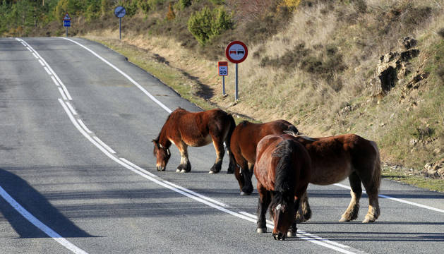 Carretera de Belagua.