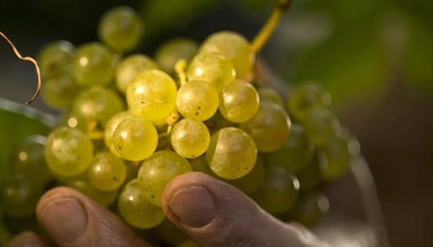 Beber vino con moderación puede resultar beneficioso para el organismo