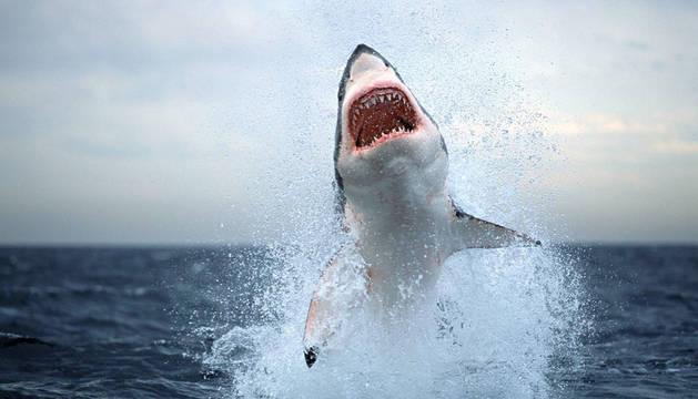 Un tiburón blanco mata a un recolector de vieiras en Australia