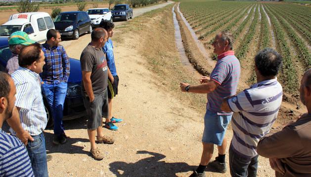 Un grupo de agricultores se acercó ayer a comprobar los daños en los cultivos, algunos de los cuales han quedado inservibles.