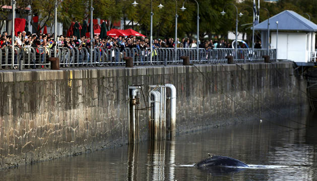 La ballena es observada por decenas de personas en uno de los diques del barrio de Puerto Madero, en Buenos Aires (Argentina)