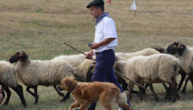Concurso de perros pastor en Amaiur.