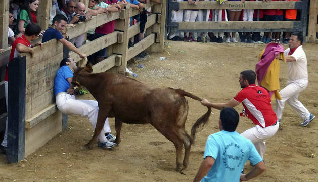 Momento en el que la vaca cornea al joven de Calahorra.