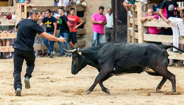 Un recortador aficionado se zafa de una vaca en Lerín.