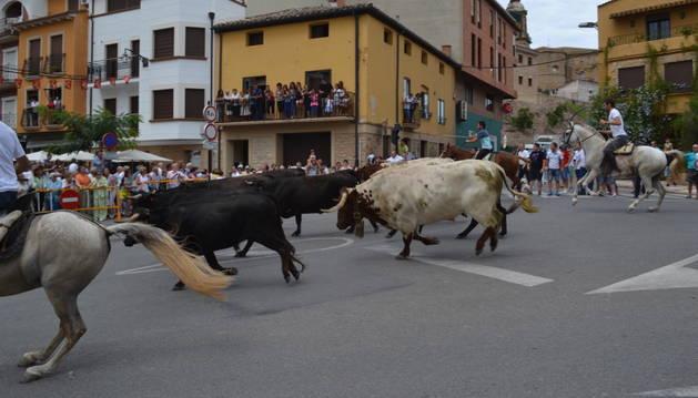 Las vacas a su paso por la calle Augusto Echeverría.