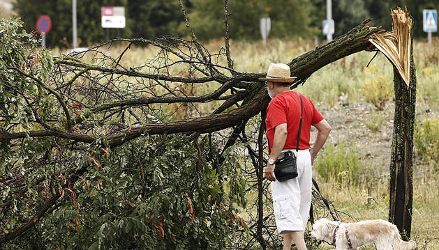Un hombre y su mascota observan un árbol roto en Pamplona.