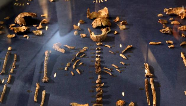 Fósiles del Homo Naledi.