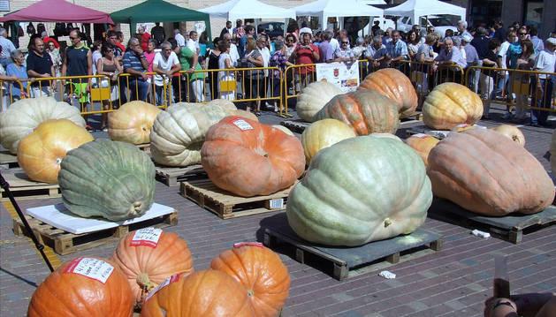 Concurso Internacional de Calabazas 'Gigantes de Navarra' 2014.