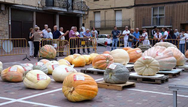 Un total de 34 calabazas fueron presentadas al concurso que se celebró en la localidad ribera de Valtierra.
