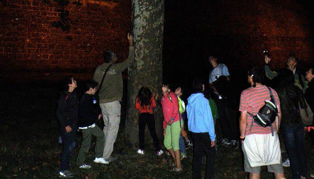 El viernes se celebrará un nuevo paseo nocturno para ver murciélagos