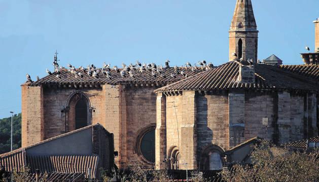 Decenas de cigüeñas en los tejados de la Catedral de Tudela.