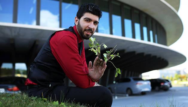 Carlos Jordán Lasheras muestra dos plantas de fresa cultivadas sin tierra.