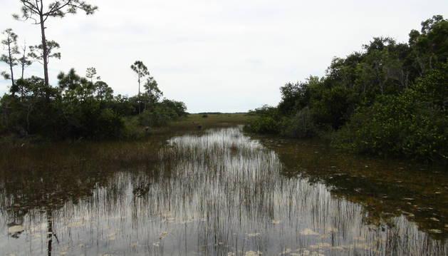 Una zona de los Everglades en el sur de Florida.