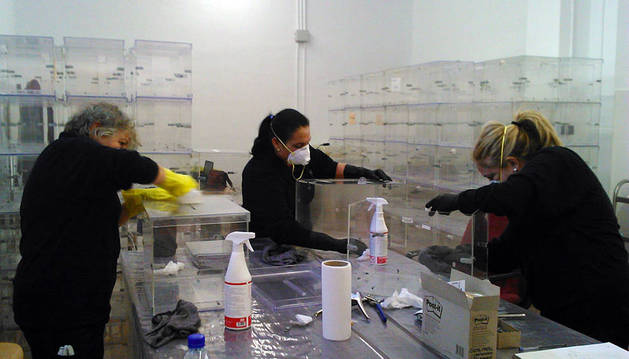 Tres de las trabajadores limpian varias urnas.