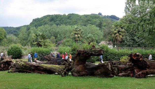 Parque Natural de Bertiz.