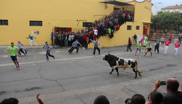 Salida del primer astado desde la plaza de toros de Lodosa.