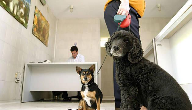 Dos perros, esperando a ser vacunados.