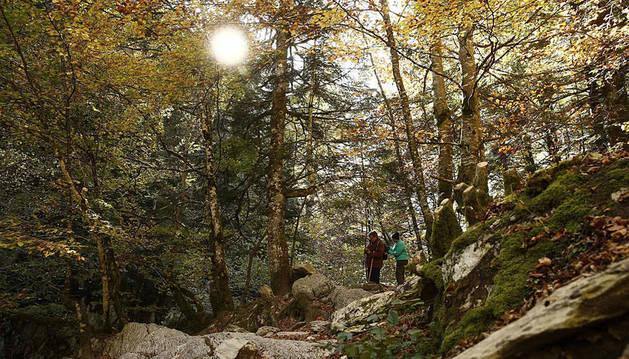 Varias personas pasean por el interior de la Selva de Irati.