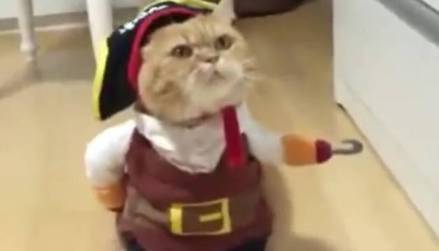El gato, disfrazado