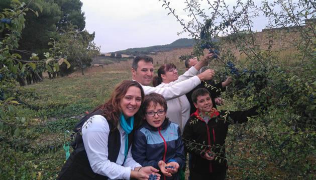 La visita guiada permite conocer todo el ciclo del pacharán, desde la recogida del fruto hasta su elaboración, como se ve en las imágenes de un grupo reciente de visitantes. Todo para subrayar el carácter natural y tradicional del pacharán.