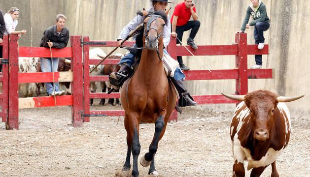 Caballos y toros en la Feria del caballo de Marcilla.