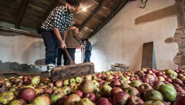 Un 'sagarjole' extiende las manzanas en el desván de la casa Gamioxarrea de Arizkun.