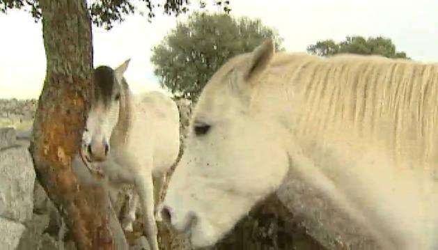 Aumenta el rechazo contra el maltrato animal