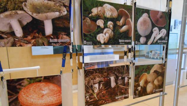 Exposición del Museo de Educación Ambiental.
