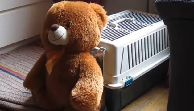 El oso de peluche de Arvo, el perro más terco