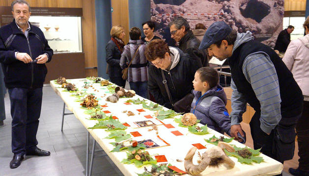 Imagen de la exposición de especies que se llevó a cabo en el Museo de Castejón.
