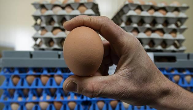 El 4 por ciento de los navarros sabe leer el código impreso en el huevo
