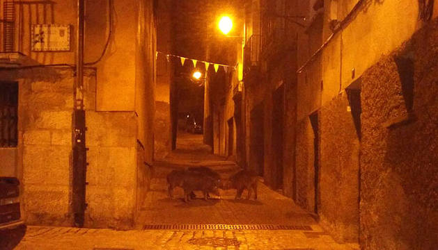 Cuatro jabalíes recorren varias calles del Casco Viejo de Tudela