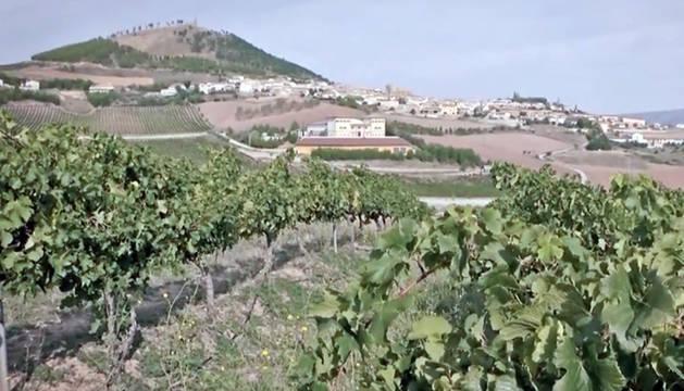 Fotograma del documental  'I love vino'.