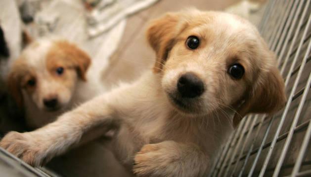 Cachorros en la Protectora de Animales de Navarra.