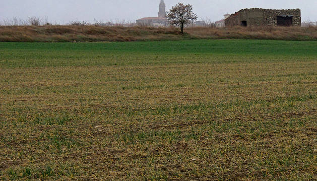 """El cultivo de cereal en la Ribera empieza a ser """"preocupante"""" a causa de la sequía"""