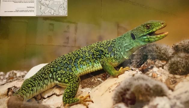 Uno de los reptiles de la exposición.