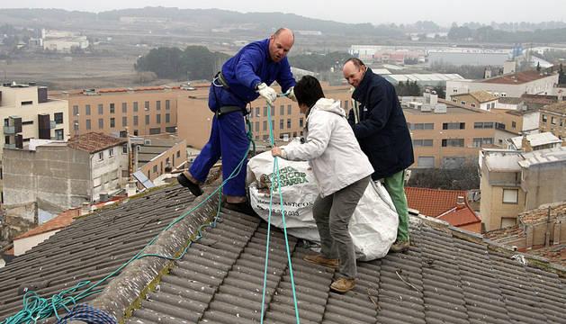 Tres técnicos de Gurelur retiran el nido, ubicado en el número 1 de la calle Pascual Oñate de Corella.