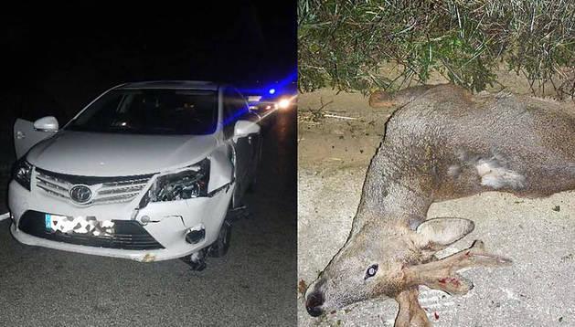 El coche accidentado y el corzo atropellado.
