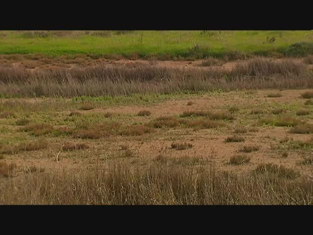 Sequía en Doñana