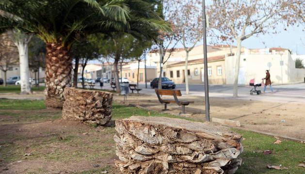 Imagen de la base de dos palmeras cortadas en la plaza Ana Huguet de Tudela.