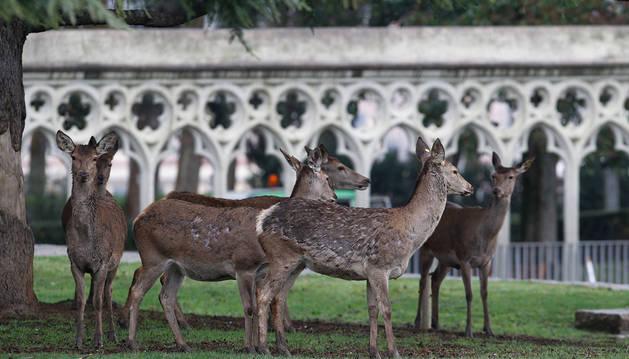 El futuro de los ciervos en la Taconera divide las opiniones en la calle