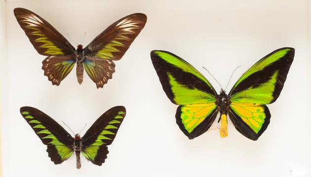 El Museo de Ciencias de la Unav celebra el Día Mundial de Darwin