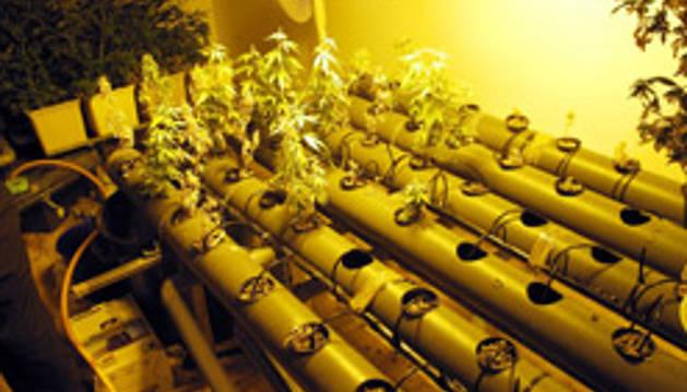 La Policía Foral puso 2.334 denuncias por posesión de drogas en la vía pública