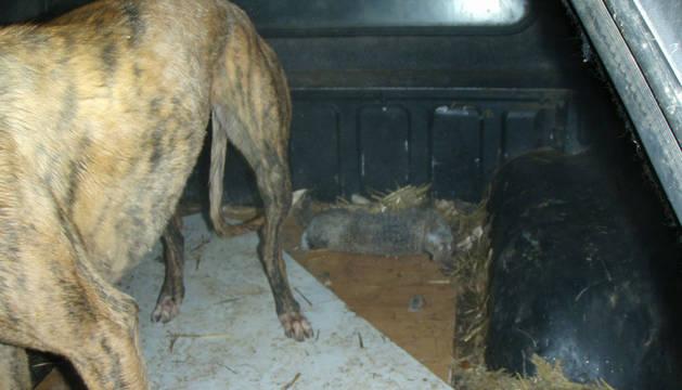 Dos denunciados en Mendavia por caza furtiva nocturna