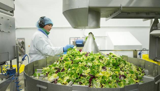 Fábrica de ensaladas de Florette