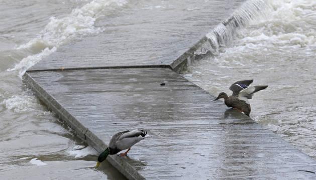 Las pasalelas del río Arga, a su paso por Pamplona, se encuentran cerradas debido a las lluvias.